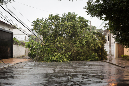 Tree toppled by tropical storm preventing vehicular traffic in the street, São Paulo, Brazil. 写真素材