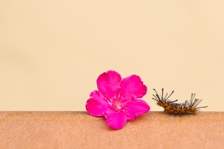 A flower on the path of caterpillar