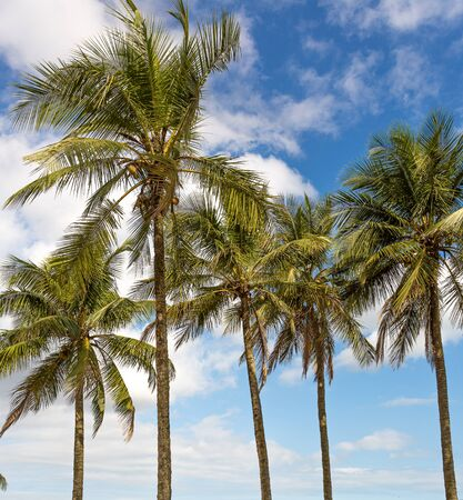 Coconut palms background with blue gradient sky. Stok Fotoğraf