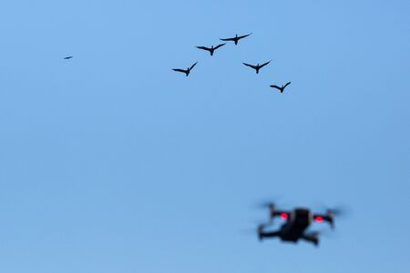 Drone filming and birds return to their nests in the late afternoon. Stock fotó