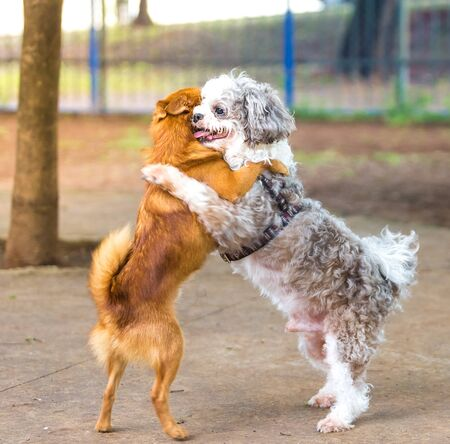 Two dogs hugging each other. Stock Photo