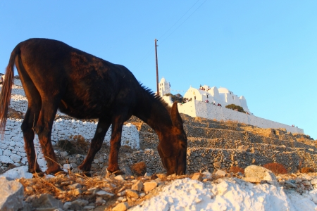 Donkey: typical mean of trasport in Cyclades islands photo