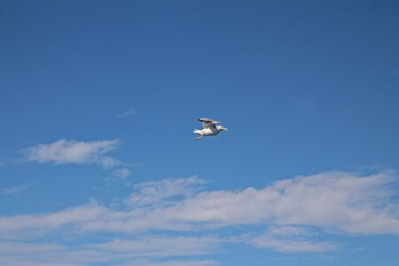 The flying seagull in the blue sky