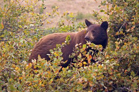 Black bear inside the National Bison Range