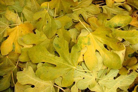 fallen leafs on autumn season photo