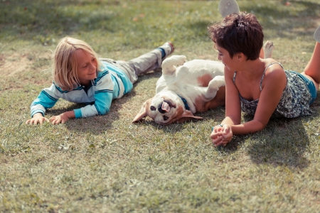 Two Children Playing with the Dog Stock Photo - 15096238