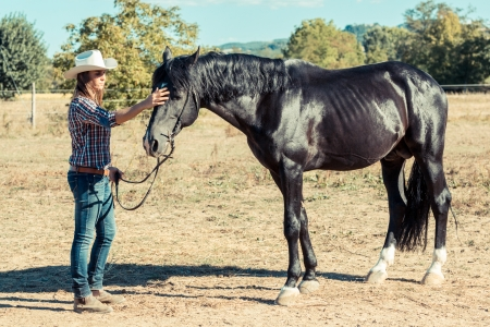 Cowgirl with a Black Stallion Horse photo