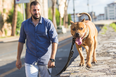 Man walking with his dog. A man  is walking next to the river with his dog on a leash. He is looking at the dog and is wearing summer clothes.