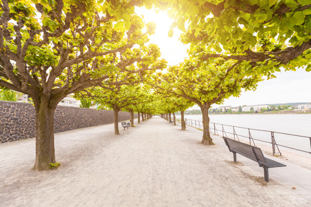 park: Empty footpath along Rhine river in Bonn. There are two rows of trees with green leaves, and some benches to take a seat. In the bottom of the image there is a lot of free space to add some text.