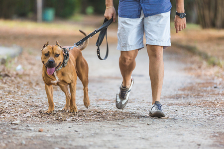 Man walking with his dog at park. Close up view on dog and on the legs of the man holding it on leash. Stockfoto