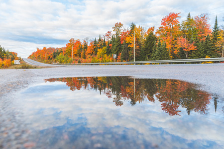 autumn colour: Highway in Canada and trees with autumn colours reflected in a puddle. Maple trees with multi colour leaves. Travel and nature concepts.