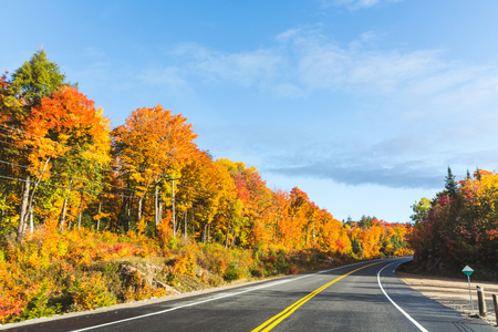 autumn colour: American highway through the wood in autumn. Maple trees with multi colour leaves along the road on a sunny day in Ontario, Canada. Travel and nature concepts.