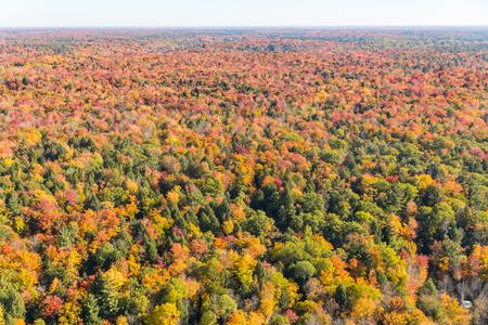 木は、秋の航空写真ビューでカナダの木。中に美しい色と無限のウッドランドのヘリコプターを見る秋オンタリオ州のシーズンです。旅行と自然の