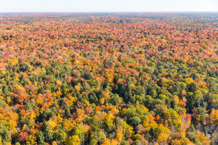 Wood and trees in autumn, aerial view, Canada. Helicopter view of an endless woodland with beautiful colors during fall season in Ontario. Travel and nature concept