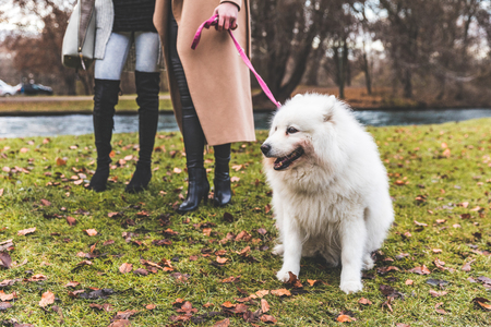 White dog on leash at park with two women. Furry pet being lead by two girls on a walk at park in Munich. Animals and lifestyle concepts Banco de Imagens