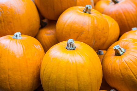 Orange pumpkins close up, halloween background. Few round pumpkins on display at vegetable market, very famous as the halloween vegetable 版權商用圖片