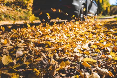 カナダの田舎道を車が通り過ぎて紅葉。SUV車は、自然の森の背景で、過去を駆動します