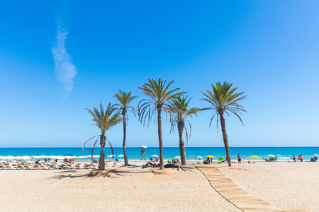 Seaside in Alicante, with palm trees on the beach. Sunny summer day in Spain, beautiful beach with people sunbathing and having fun. Travel, vacations and leisure concepts