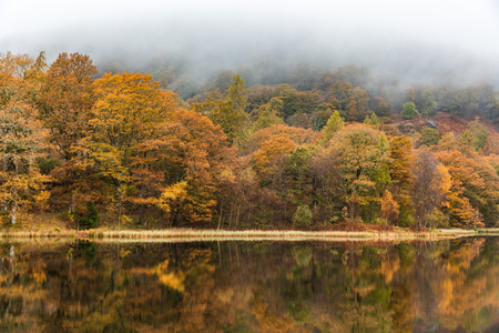 Autumn view of trees and reflection on the water. Misty and moody scene in the Lake District, UK, at peak of fall season with multicolour leaves, mainly orange and yellow. Great as a background image 스톡 콘텐츠
