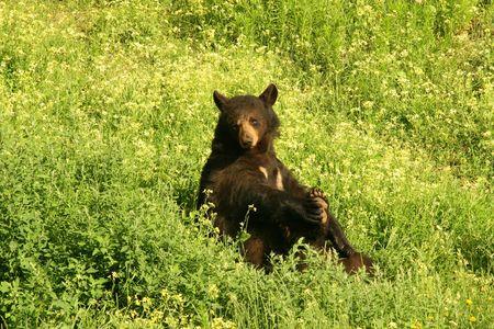laid back: Laid Back Bear