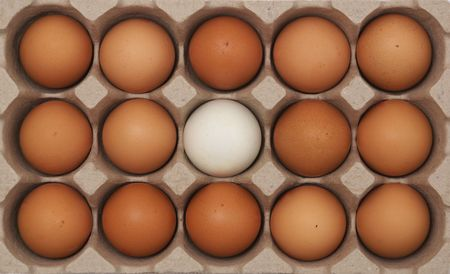 different egg photo