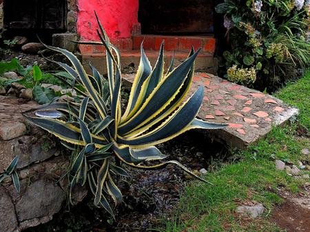 Andean flowers garden