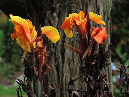 listless: Dead flowers Stock Photo