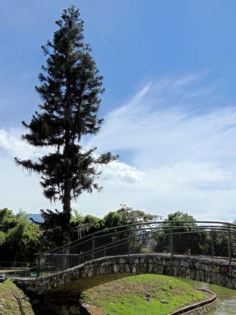 Landscapes trees and vegetation in Merida, Venezuela. Imagens