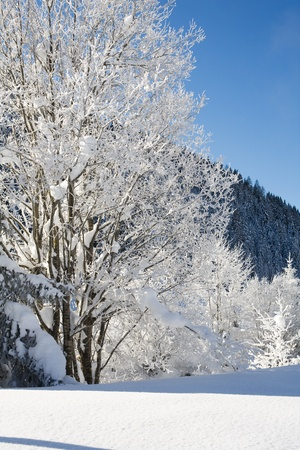 skie: beautiful image of a cold  winter scene with mountains  and snow and trees