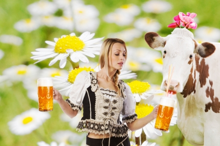 girl in traditional austrian or german oktoberfest clothes holding a big glass of beer in her hands with a cow photo