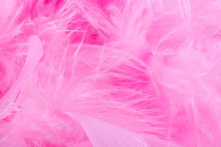 boas: closeup o macro tiro di una rosa o rosa boa di piume o penne Archivio Fotografico