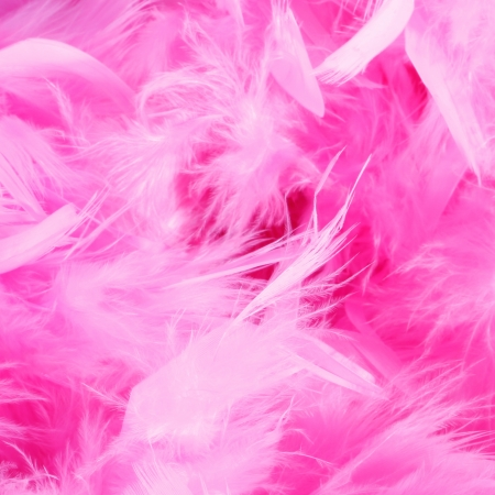feather boa: background closeup or macro shot of a pink or rose boa feather or feathers