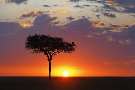 Beautiful sunrise over the vast Serengeti plains in the Masai Mara National Reserve, Kenya. Stock Photo