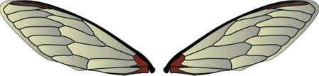 gossamer: Wings Illustration