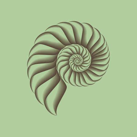 spiral: Een vector schelp.