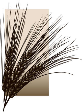 the spikes: Wheat or barley against a sepia rectangle. Illustration
