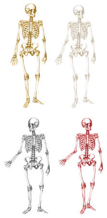 Antique style skeletons in vector format. Illustration