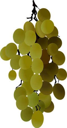 grapes vine berries wine Stock Vector - 4774497