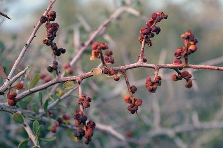 patagonia: Red Desert Flower at South Patagonia