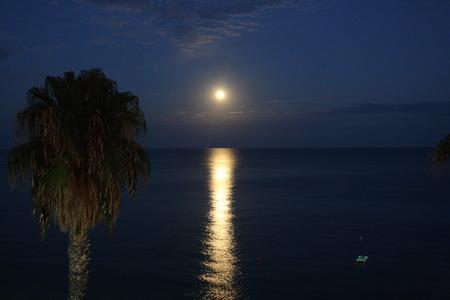 Palm Tree Reflection Sea moon. Night sea. Moon over sea