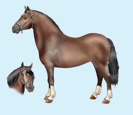 welsh: Pony breeds: Welsh mountain - Artistic illustration