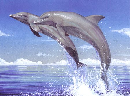 Couple of dolphins jumping off the water photo