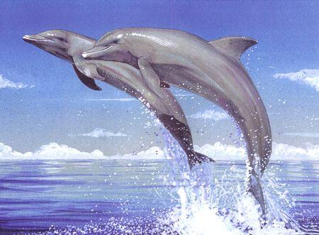 Pareja de delfines saltando fuera del agua
