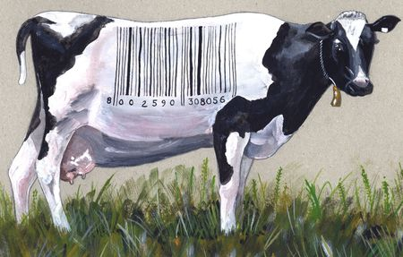 priced: Acrylic illustration of a black and white cow with a price tag on Stock Photo
