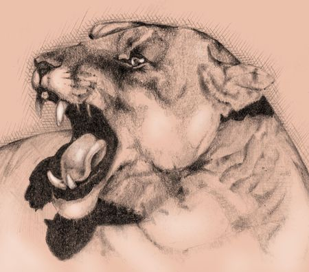 Wild roaring cougar close up. Monochrome illustration Stock Photo