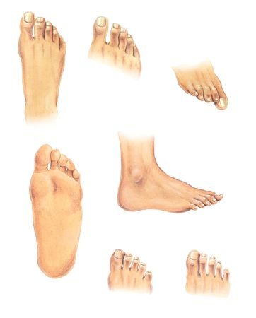 Watercolor illustration: set of human feet in different positions illustration