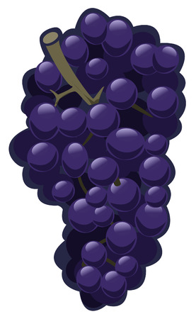 Illustration of purple grapes on white background - Isolated object Vector