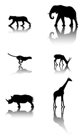 animals shadow: Six silhouettes with reflex of wildlife animals: lion, elephant, cheetah, antelope, rhinoceros, giraffe Illustration