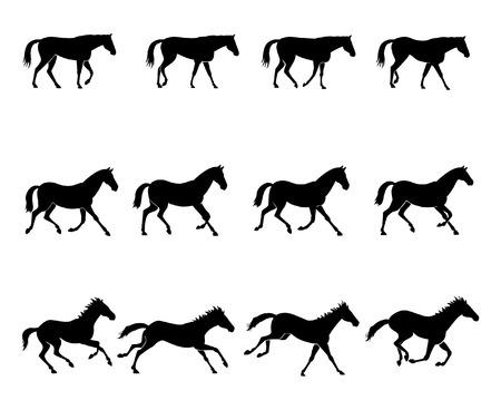 galop: Les trois allures naturelles des chevaux. Premi�re rang�e: MARCHE Deuxi�me rang�e: trot Troisi�me rang: Gallop Illustration