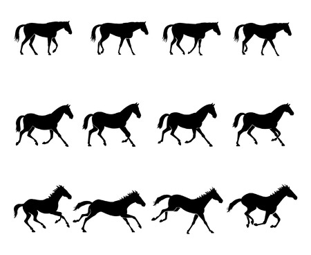 horse running: The three natural gaits of the horses. First row: WALK  Second row: TROT  Third row: GALLOP